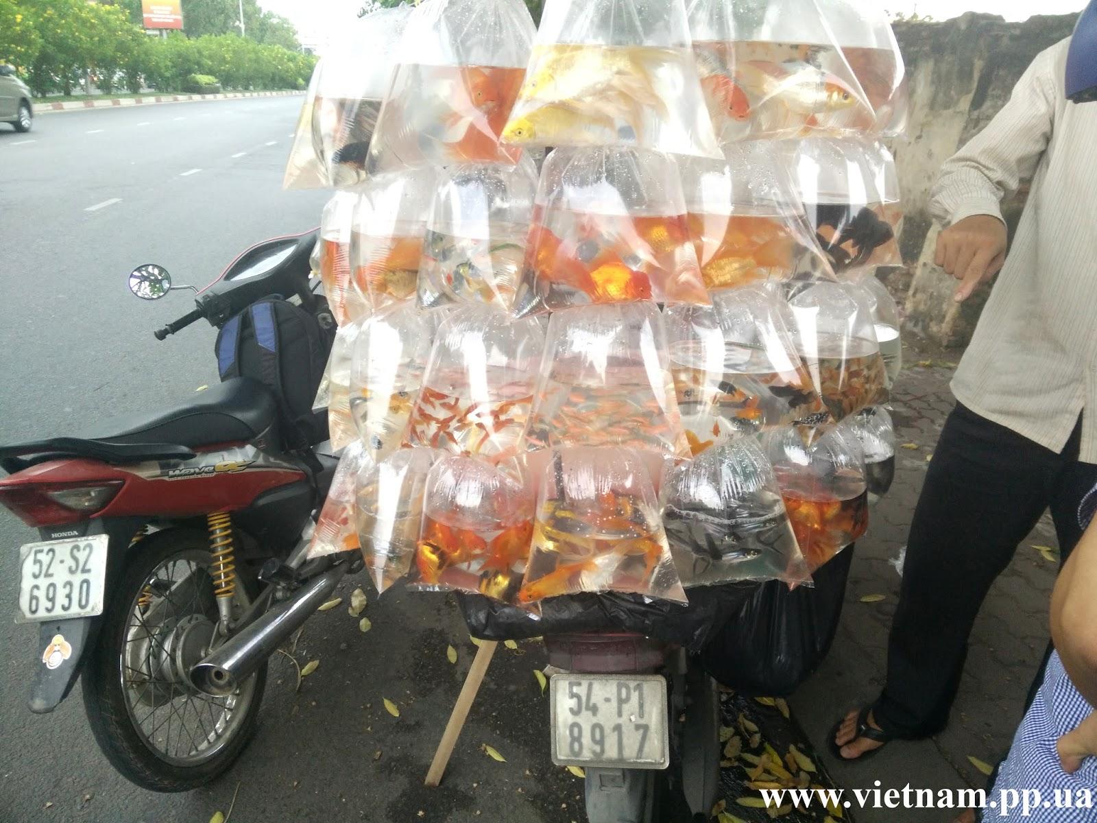 Рыбки в Хошимине