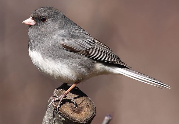 Wild Birds Unlimited: January 2014
