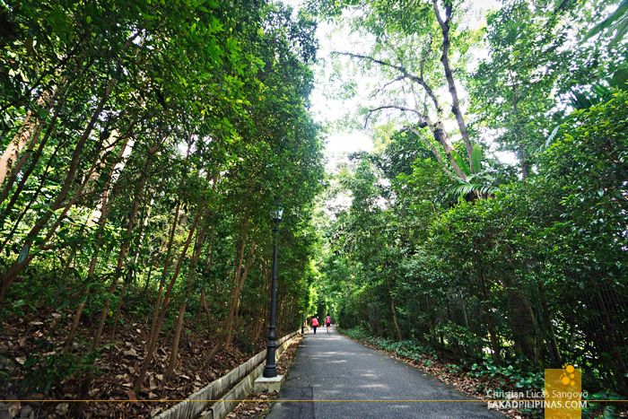 Singapore Botanic Gardens Pathways
