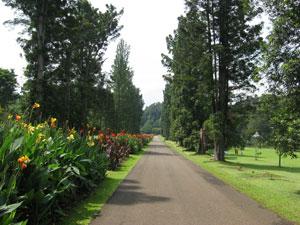 Kebun Raya Bogor - Indonesia