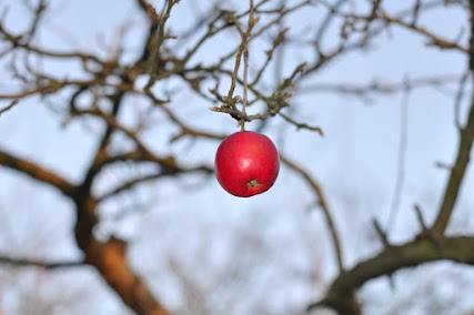 A single red apple hangs in a tangle of branches against the sky