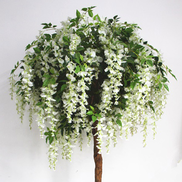 6ft White Wisteria Tree €25