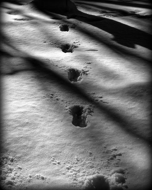 Footprints, Snow, Greenlawn Cemetery, Salem, Massachusetts, shadows