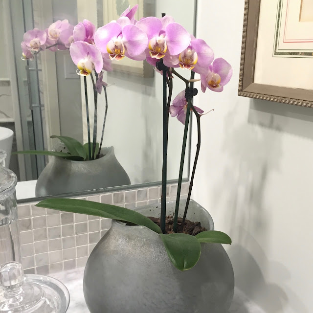Langdon Hall, Orchid, Review, Cambridge, Toronto