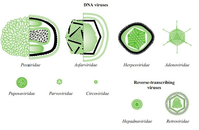 THE FUNCTION AND FORMATION OF VIRUS PARTICLES