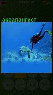 под водой аквалангист плавает с черепахой