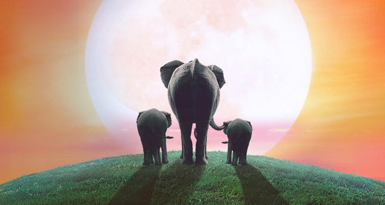 Los elefantes bebes ya est n aqu - Fotos de elefantes bebes ...
