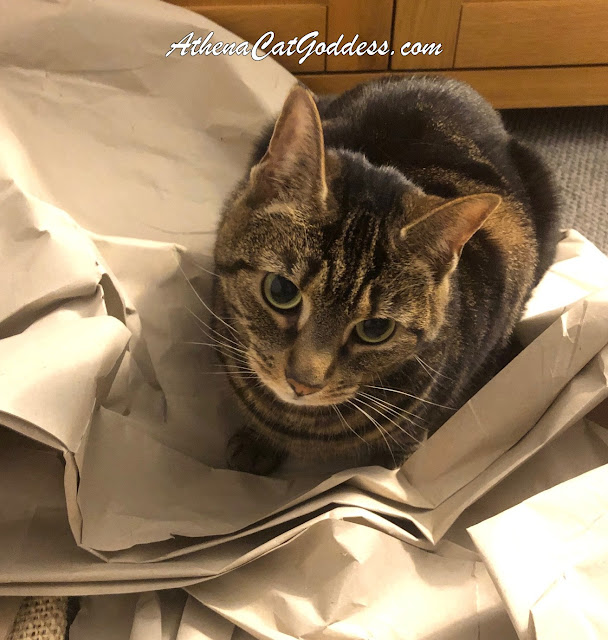 cat sitting on packaging paper