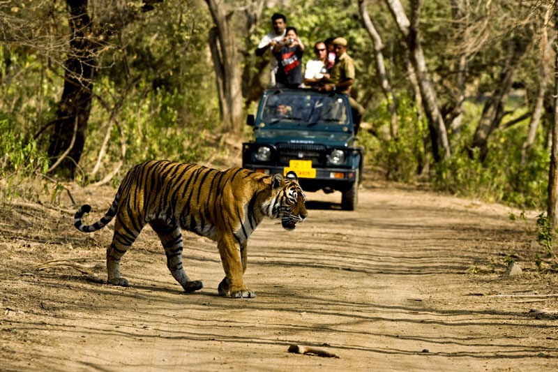 Jeep Safari, Corbett National Park