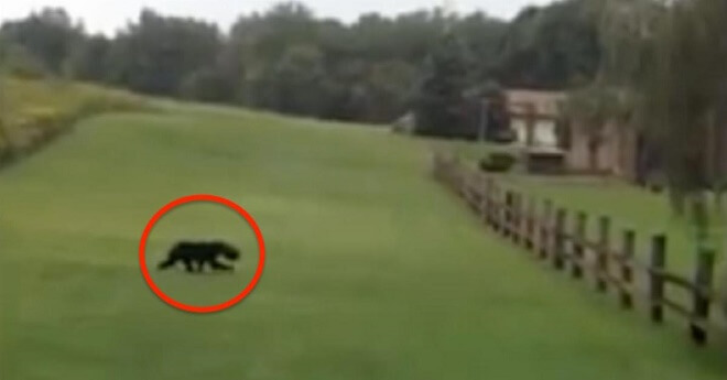 Couple Was Running Away From A Wild Animal, Until They Noticed Something Weird On Its Head. So They Turned Around...