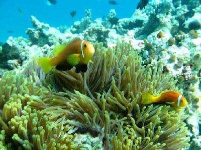 nemos maldivas
