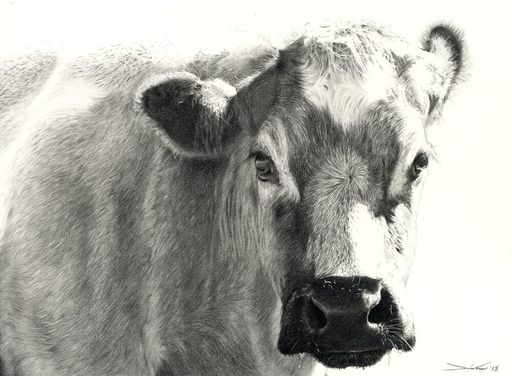 12-Beatrice-Dogs-Cats-Horses-and-Cows-Pencil-Drawings-www-designstack-co