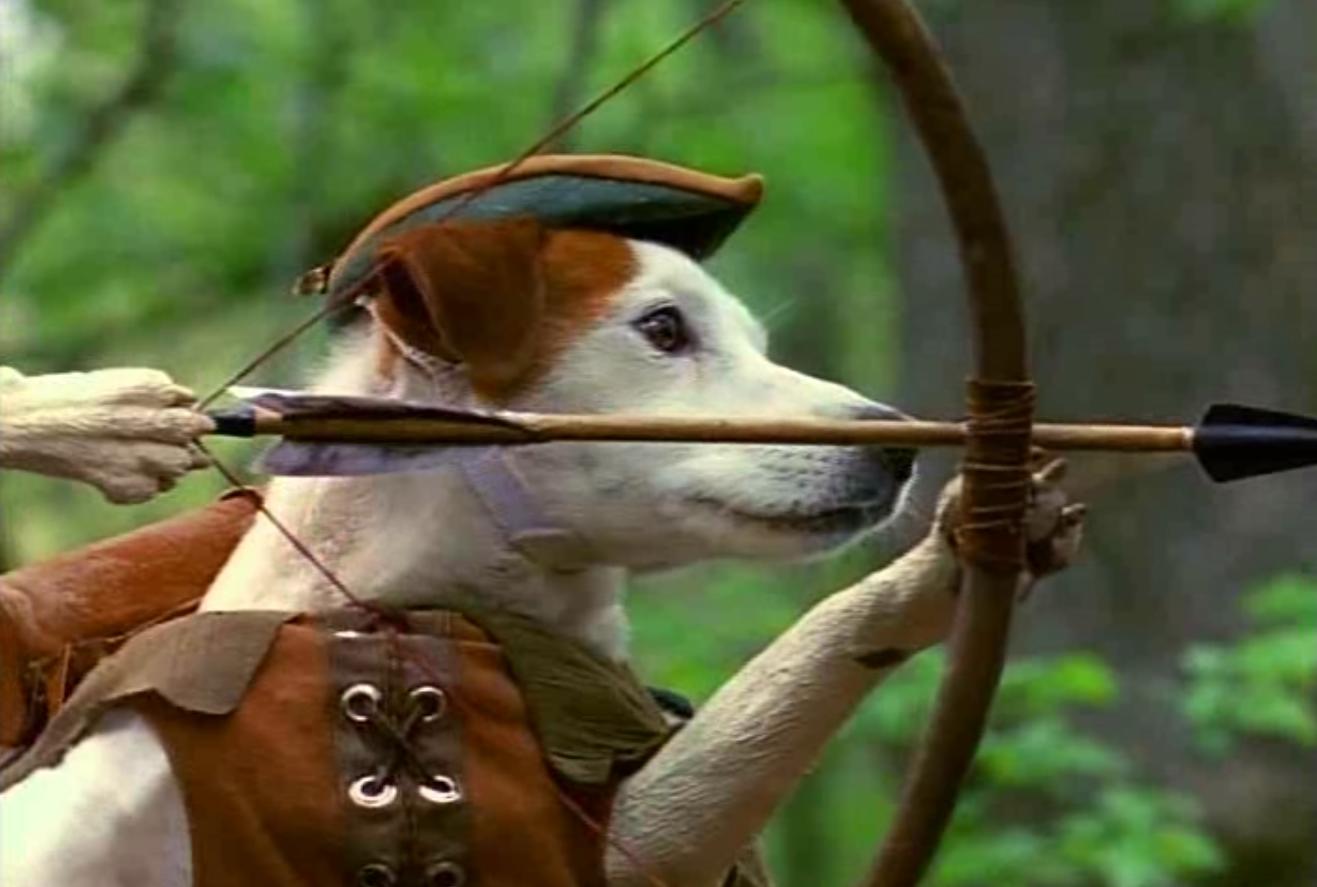 Dog Tv Show Pbs