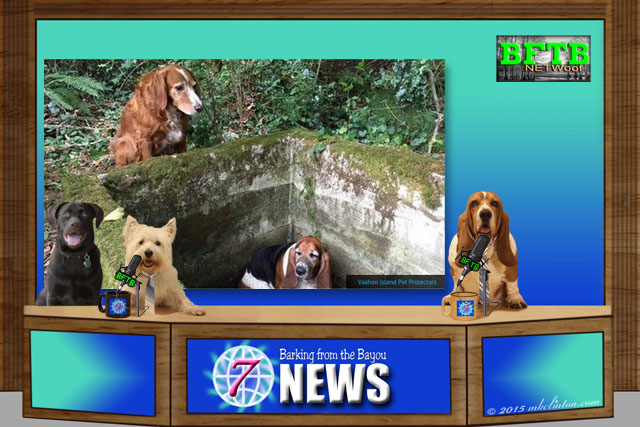Dog News Set with three dogs