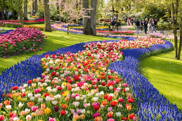 5 most beautiful places to visit in spring, spring pictures, cherry blossoms, indian blogger, british blog, spring in netherlands