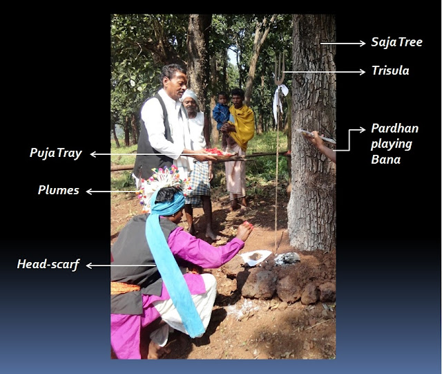 Gond priest dressed up in plumes and head-scarf worshipping Bada Dev under the Saja tree