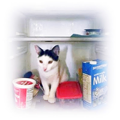 cat cooling off in the fridge in the tropics