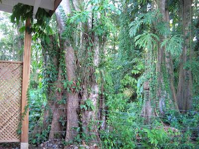 Selva en Puerto Viejo de Talamanca, Costa Rica, vuelta al mundo, round the world, La vuelta al mundo de Asun y Ricardo, mundoporlibre.com
