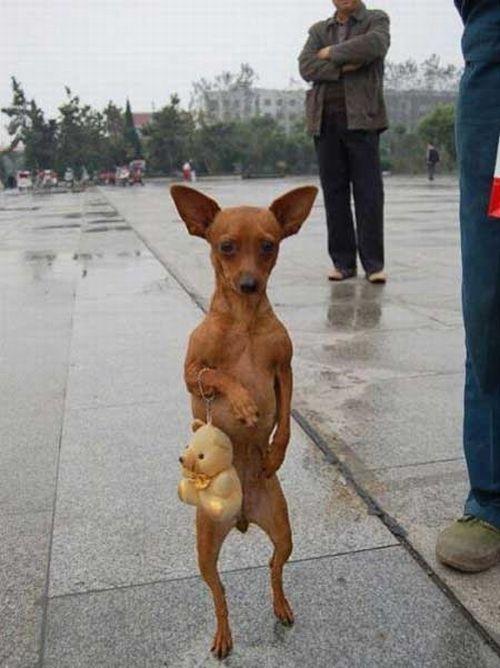 Dogs Walking on 2 Legs - Amazing ~ PModels