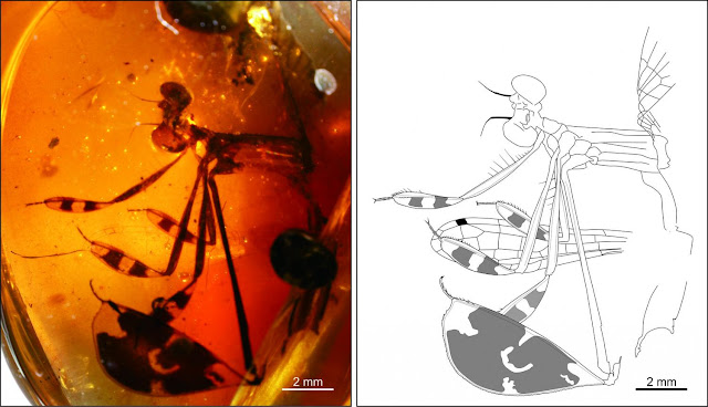 Courtship behaviour trapped in 100-million-year-old amber
