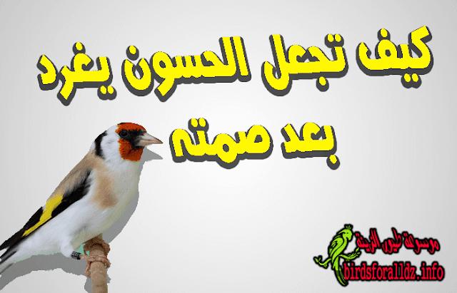 اسباب أمتناع طائر الحسون يغرد عن التغريد وعلاجه