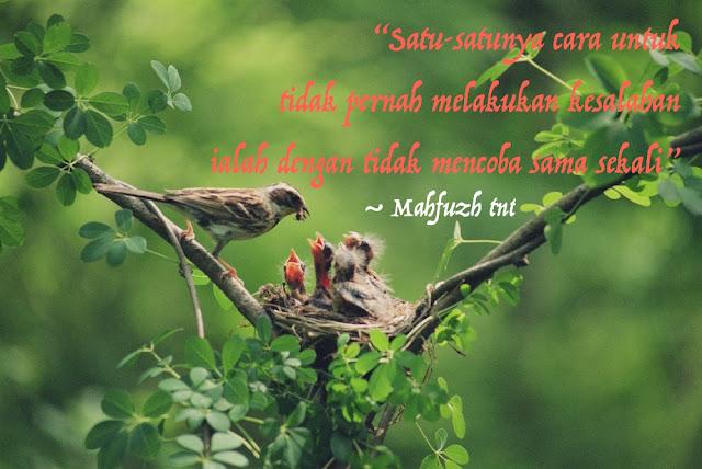 kisah burung cuckoo