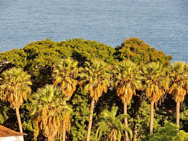 as palmeiras alinhadas que desalinham na ilha