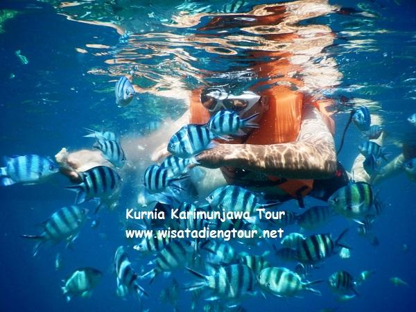 paket snorkeling di karimunjawa