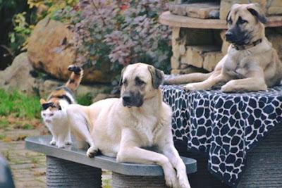 http://www.tierheilkundezentrum.eu/hunde-katzen-kleintiere/haaranalyse/