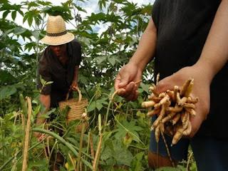 Consultor diz que agricultores da PB estão sem receber Garantia Safra. O governo do Estado está devendo há seis meses o aporte
