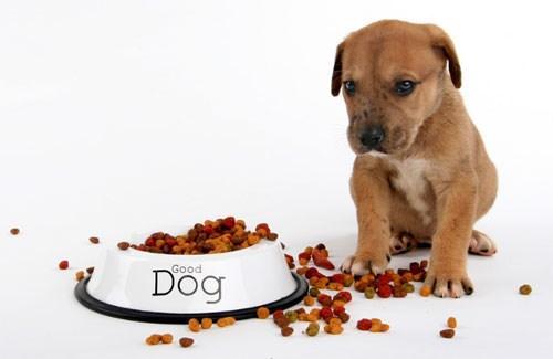 Cách chế biến thức ăn cho chó