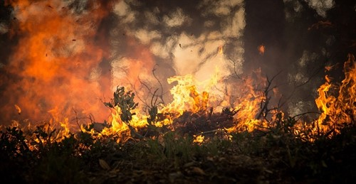 Artificial Intelligence to calculate the probability of a fire before it happens.
