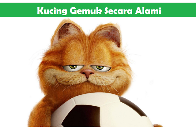 vitamin agar kucing gemuk