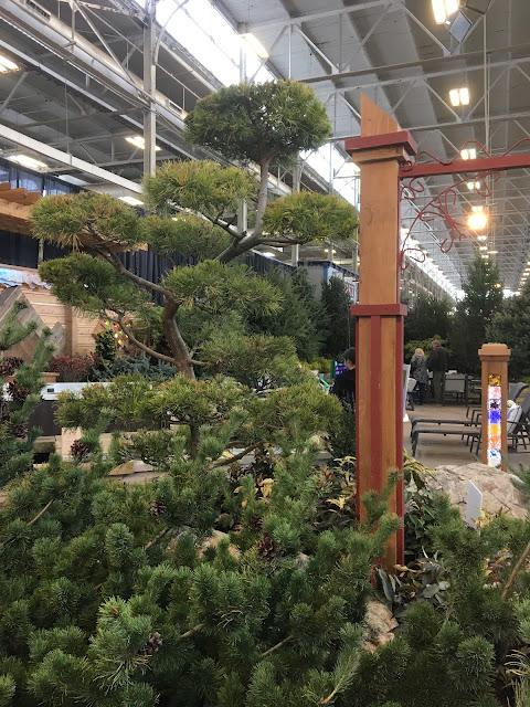 cloud form pine at garden show