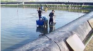 satu sentra produksi perikanan budidaya perairan di Jawa Tengah Kabar Terbaru- PROBIOTIK DALAM BUDIDAYA PERAIRAN