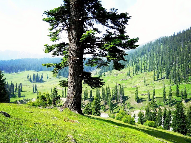 Places to see in Kashmir