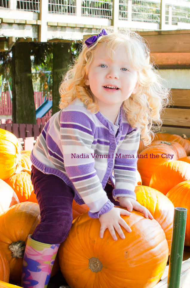 Taves Family Farm - Pumpkin Patch