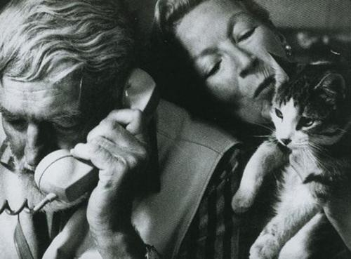 The Cat Ladies Hemingway  Cats