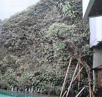 Tukang Taman Vertikal Surabaya | Vertical Garden 3