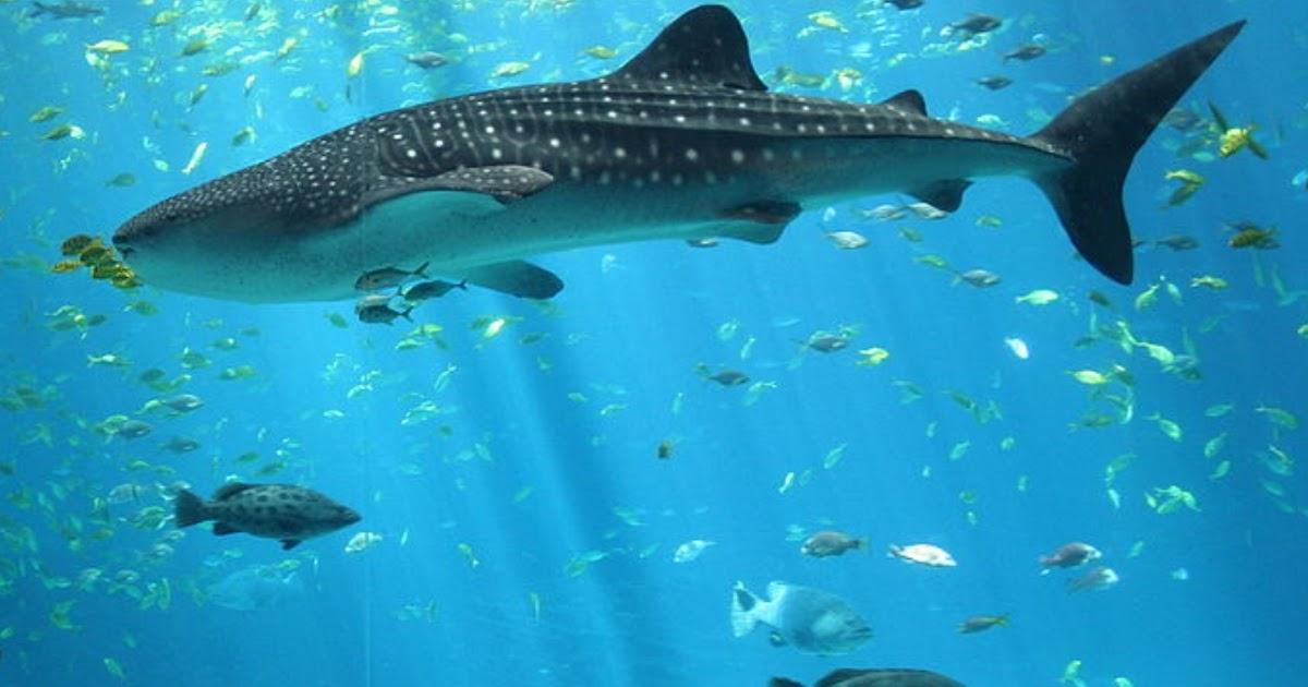 Shark Webcam, Live Mote Marine Laboratory Lido Key Florida Web Cam