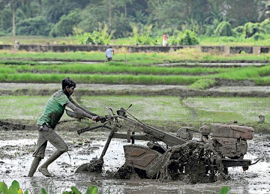 Sri Lanka's Agriculture to Rebound in 2018