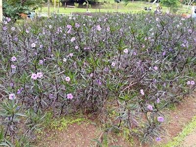 Flower at Dusun Bambu Family Park Bandung
