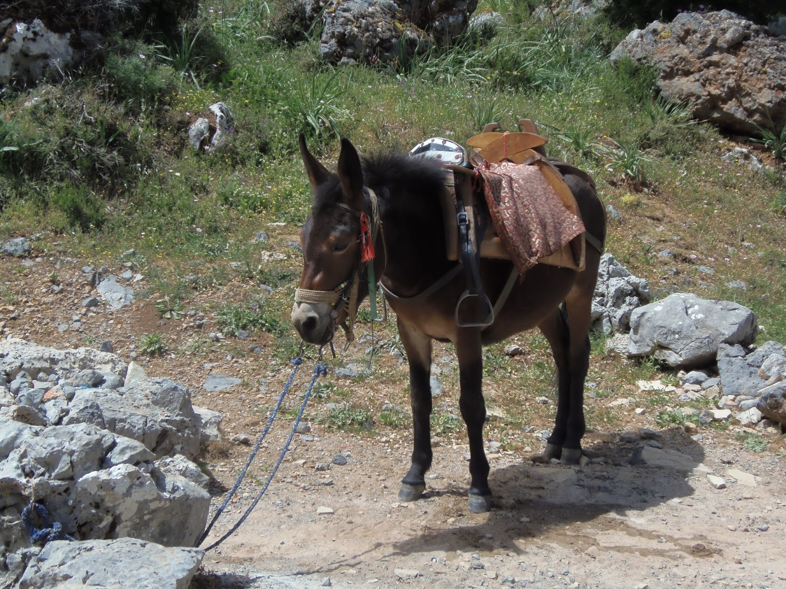 donkey, zeus, cave, ancient, history, travel, greek, greece, crete