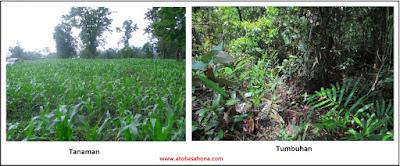 Perbedaan Arti Kata Tumbuhan dan Tanaman