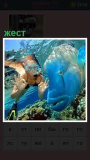 девушка под водой показывает жест пальцами рук около большой рыбы