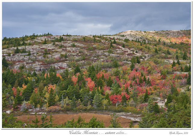 Cadillac Mountain: ... autumn colors...