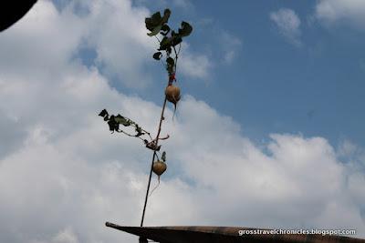 turnip vendor