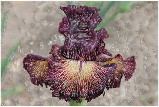 World of Irises: ANOTHER LOOK AT PLICATAS IN THE IRIS PATCH