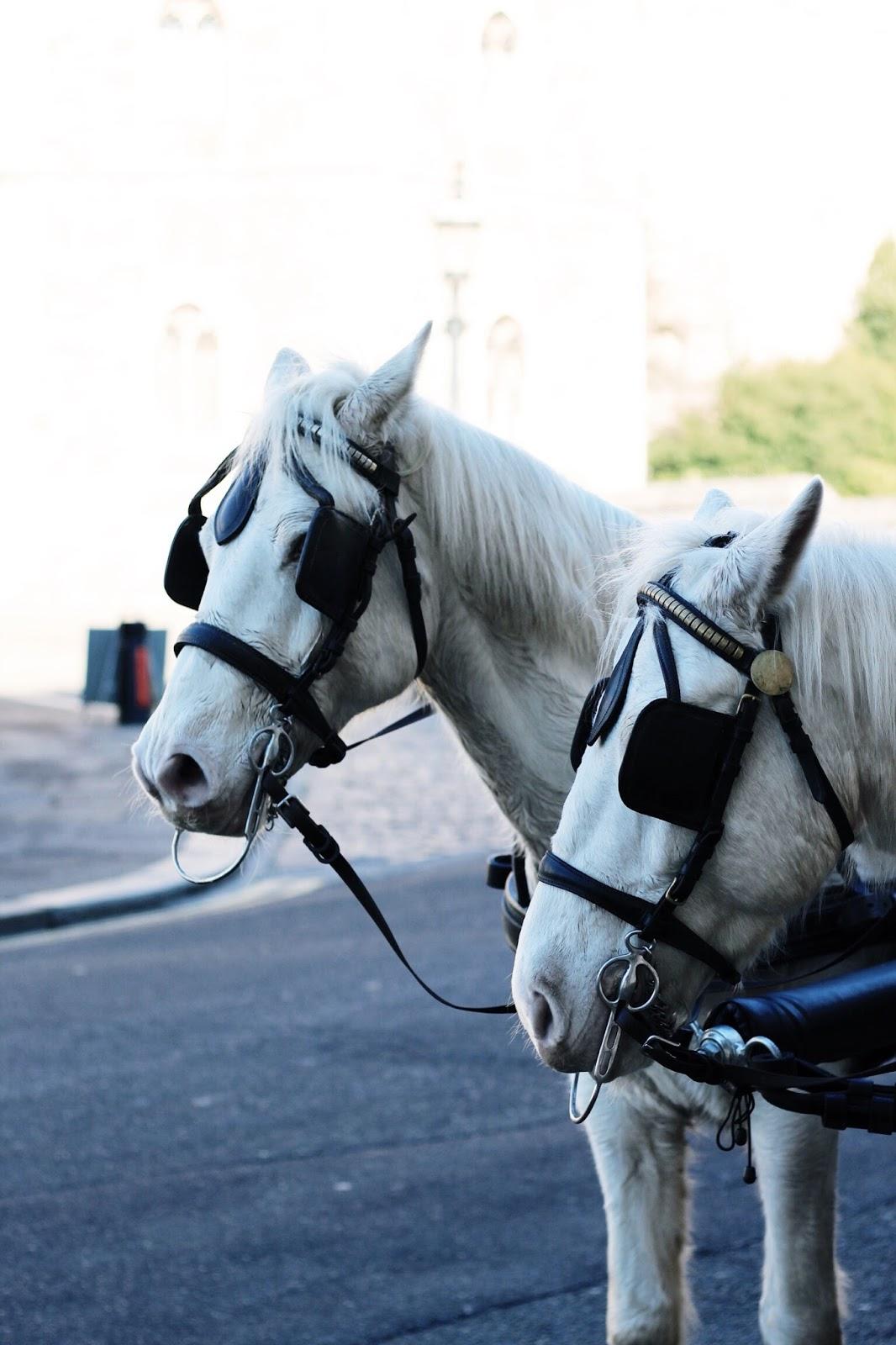 White horses outside Windsor Castle