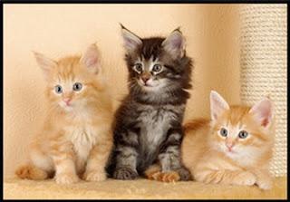 اجمل قطط %D9%82%D8%B7%D8%B74.